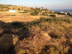 Sale Land Pyrgi, 496002